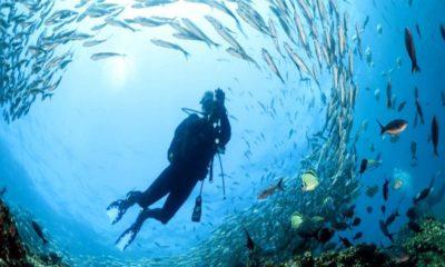 Buceo en Islas Galápagos. Foto: Galápagos Cruceros