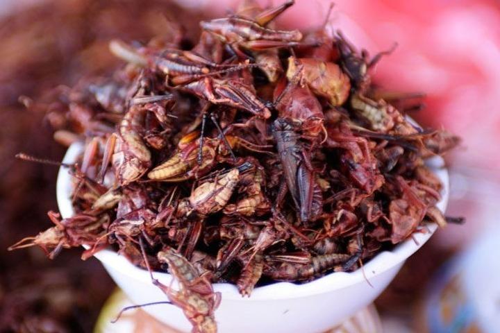Los chapulines son comida exótica. Foto: El Siglo