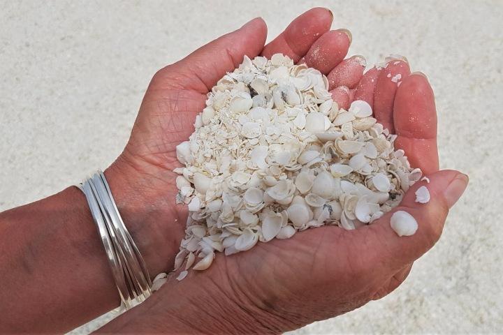 Trata de llevarte algunas conchitas de esta playa de Australia. Foto: Aussie Caravanning Lifestyle | Facebook