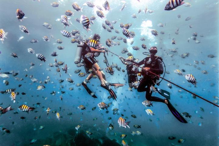 En los mares de República Dominicana podrás practicar el buceo. Foto: Go Dominic Republic
