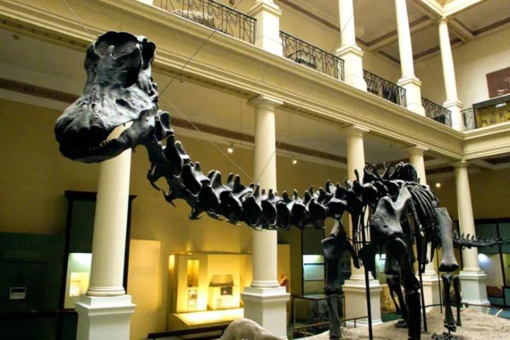 Fósil en Museo de La Plata. Foto: Civitatis