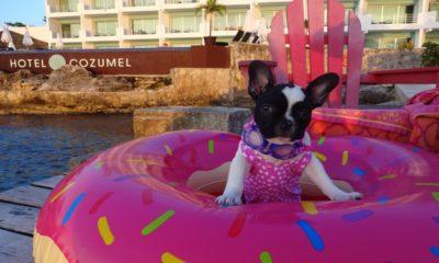 Hotel B Cozumel pet-friendly Caribe Mexicano. Foto: Turismo Caribe Mexicano