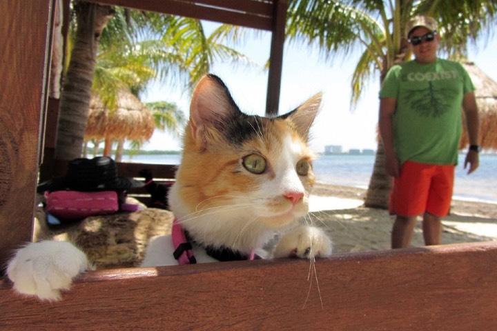 Las vacaciones pet friendly que buscas están en el Caribe Mexicano. Foto: El Punto Sobre la i