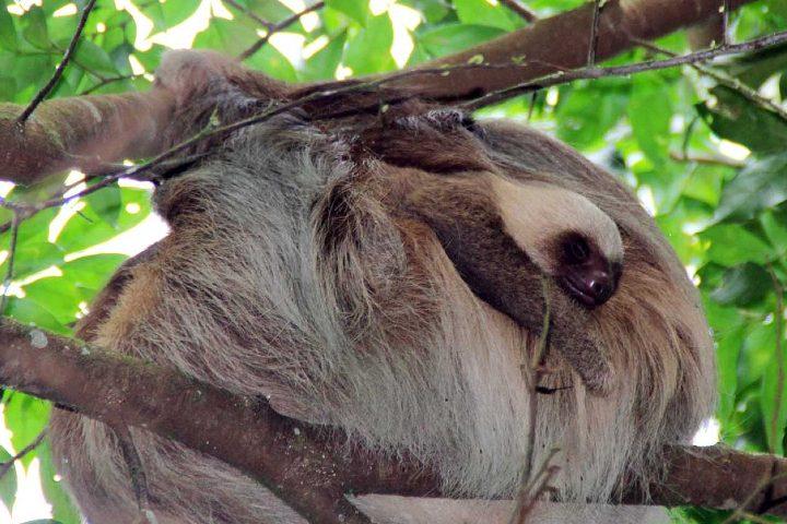 Visita el santuario de perezosos en Costa Rica. Foto: Travel + Leisure