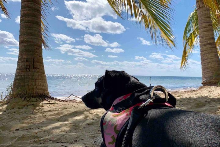 Perro en Playa del Carmen. Foto: Be Social