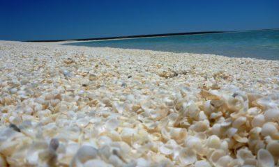 Playa de conchitas, Australia. Foto: Didou Pepita | Flickr