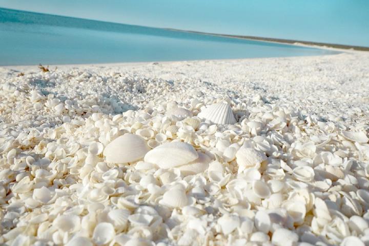 Playa de conchitas en Australia. Foto: Mochileros | Facebook