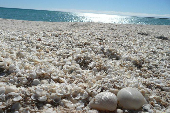 Playa de conchitas en Australia. Foto: Murat Utlu | Facebook