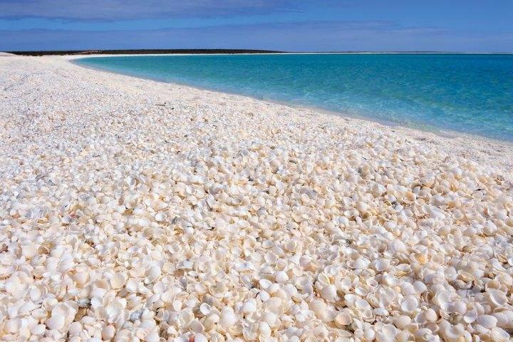 En la Isla Sanibel se encuentra la playa de conchitas de Australia. Foto: Vista al mar