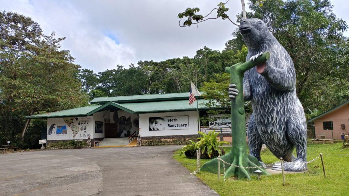 Santuario de perezosos en Costa Rica. Foto: Sloth Sanctuary of Costa Rica