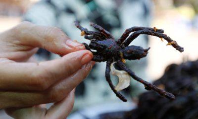 Tarántula frita, platillo exótico de Camboya. Foto: El Confidencial