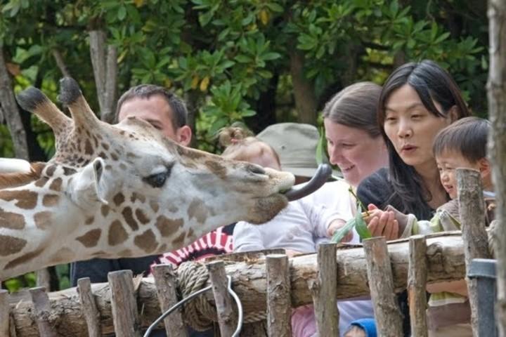 Hay zoológicos que siempre otorgan asombrosas experiencias. Foto: Zoo Blog