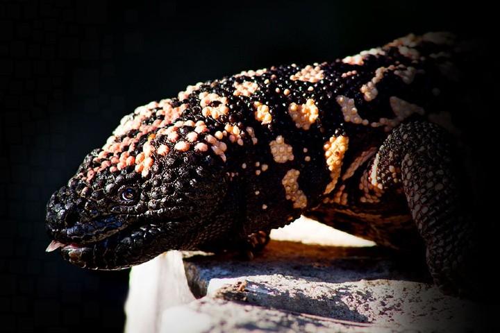 Especie de la Zona Reptil. Foto: Parque Zoológico de León