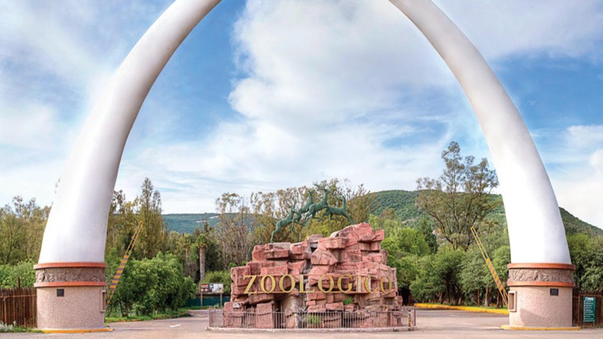 Zooleón, Guanajuato. Foto: Sitio Web