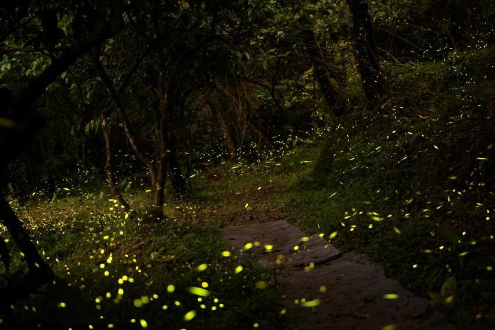 Bosques de Luciérnagas Foto ASTK 25