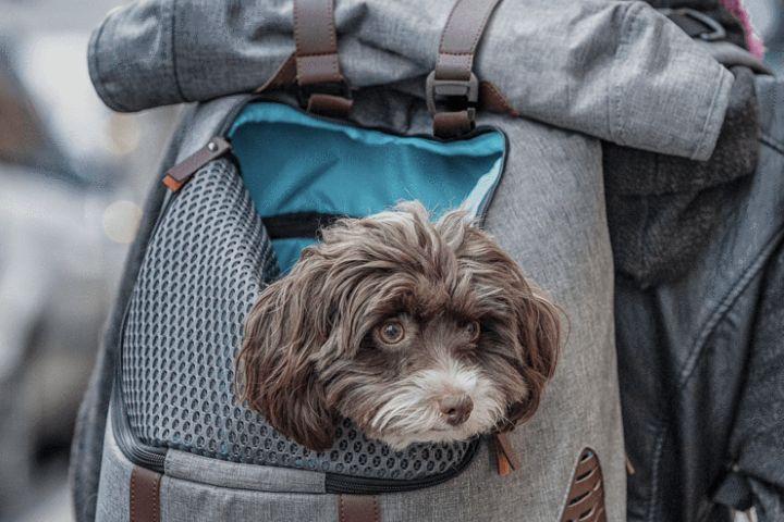 Maleta para perro. Foto: Kurgo