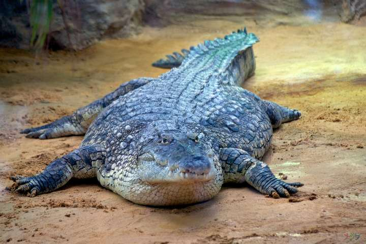 El Salado, hogar de los reptiles más grandes del mundo. Foto por Raul Carrillo G.
