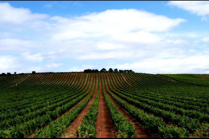 vino-oporto-de-douro-2-